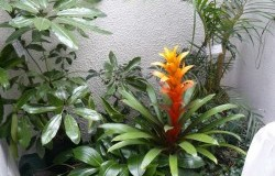 Jardin del restaurante Fuente: Hotel Nacion Fanpage Facebook